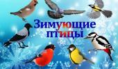"15 ЯНВАРЯ ""ДЕНЬ ЗИМУЮЩИХ ПТИЦ""."